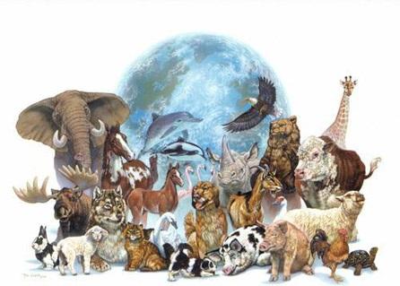 Resultat d'imatges de extincio animals